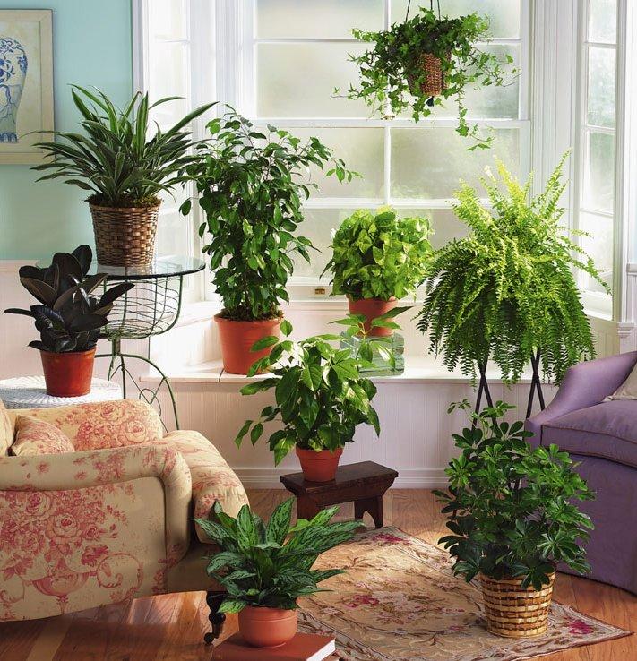 Как правильно разместить растения в горшках на подоконнике